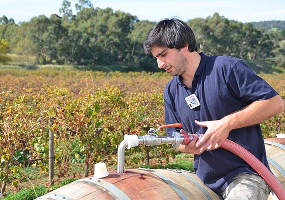 Zitta wine making process